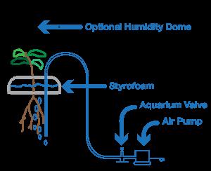 soda_hydroponics